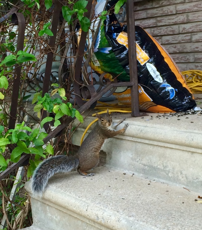 Lessons from Squirrels