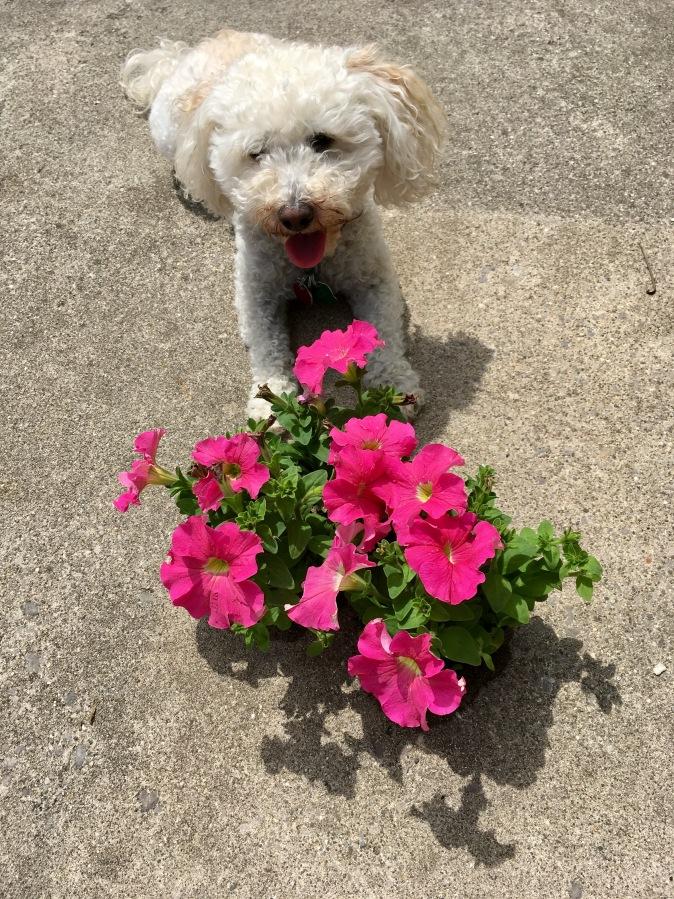 Sentimental Gardening!