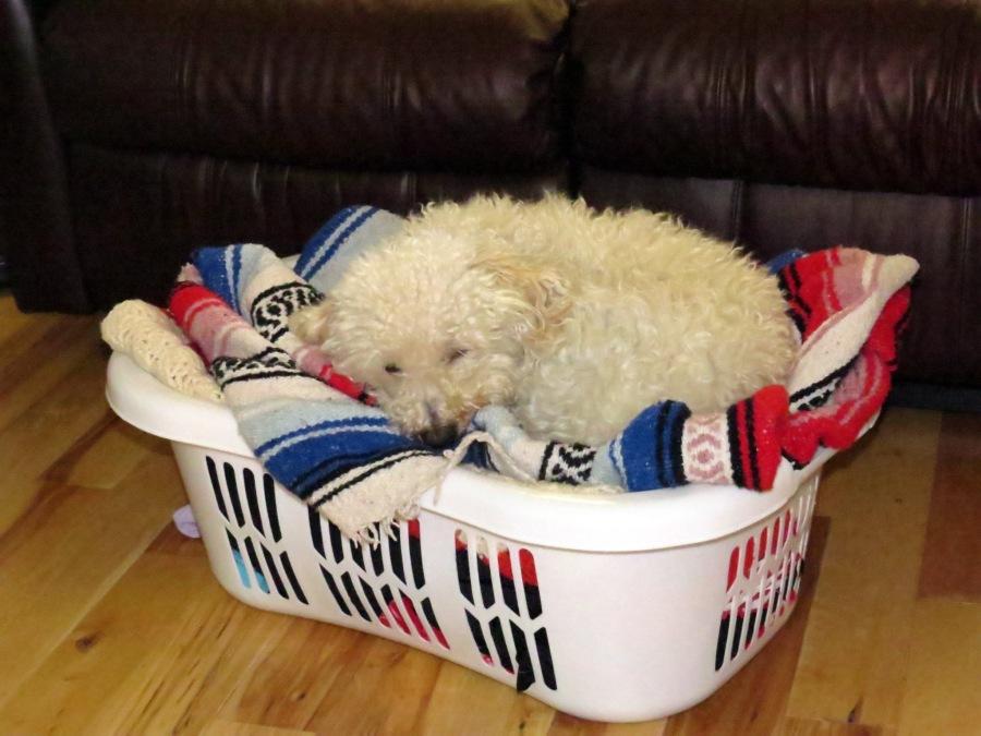 My Dog's Day toBlog!