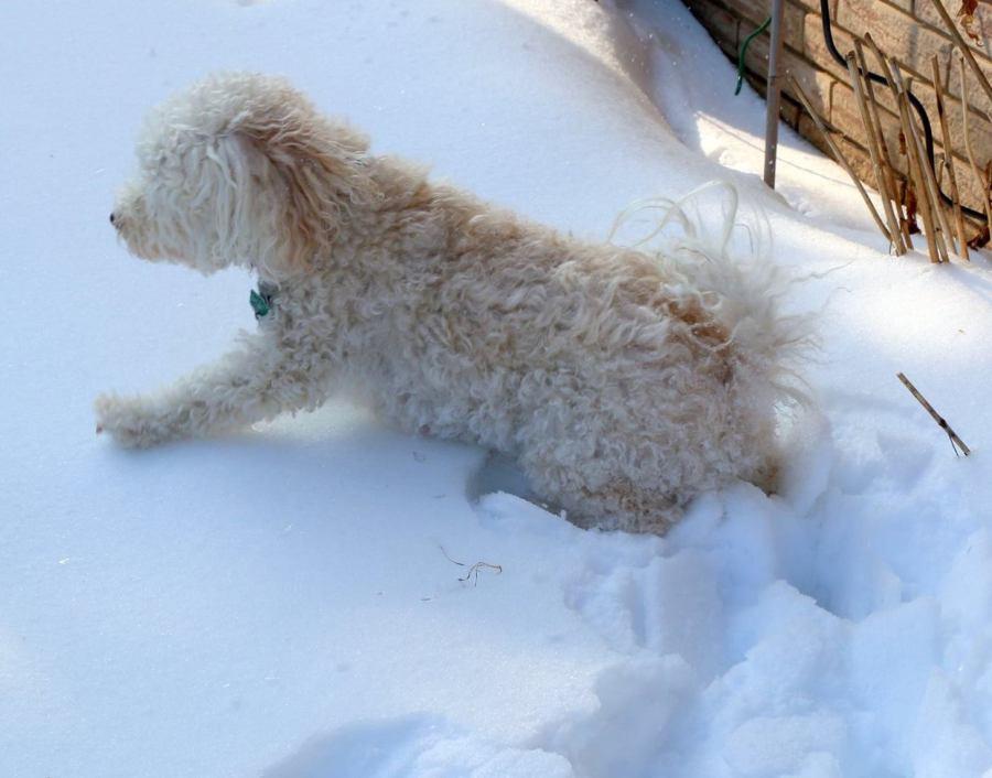 Winter…Brrr! Grrr?