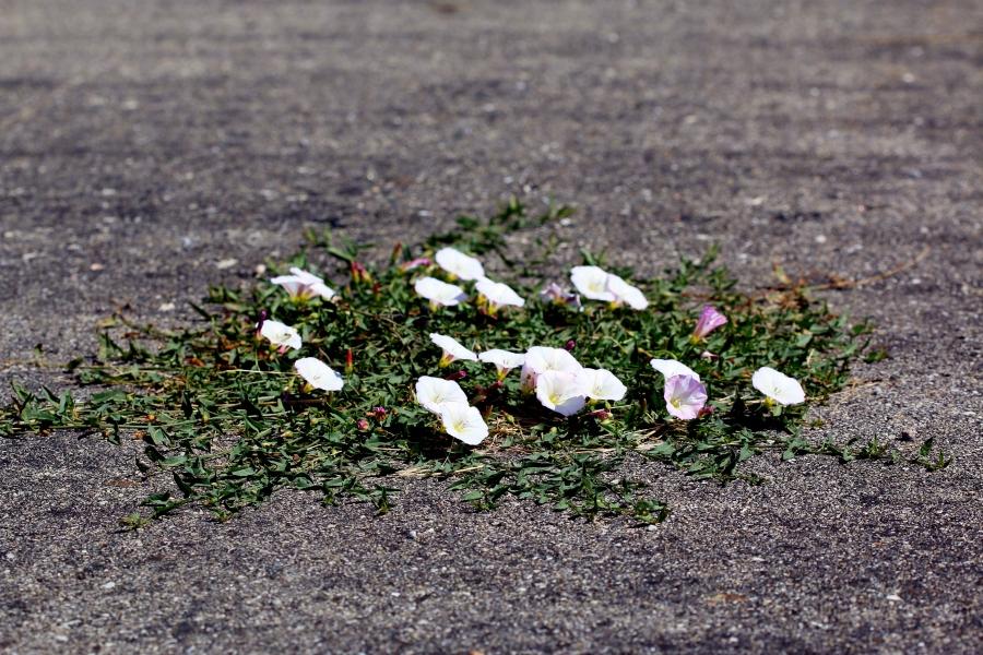 Driveway Flowers!